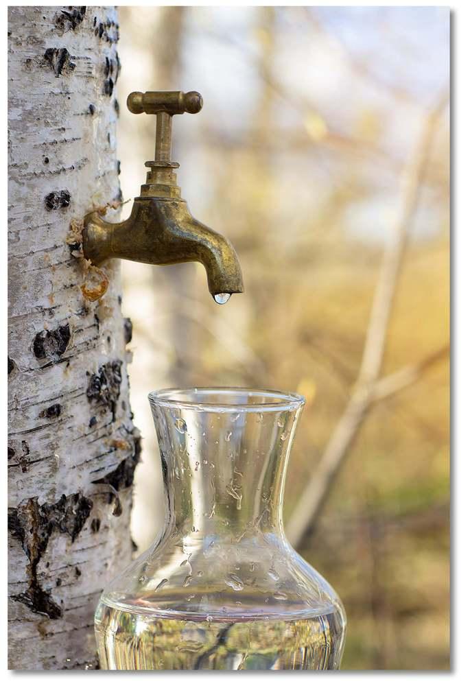 seve de bouleau vegetal water